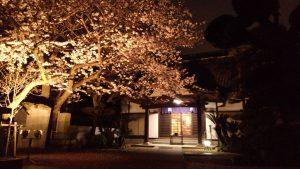 20170408桜夜